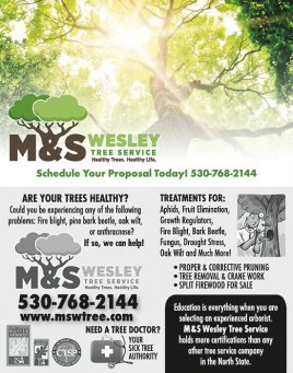 M&S Wesley Tree Service